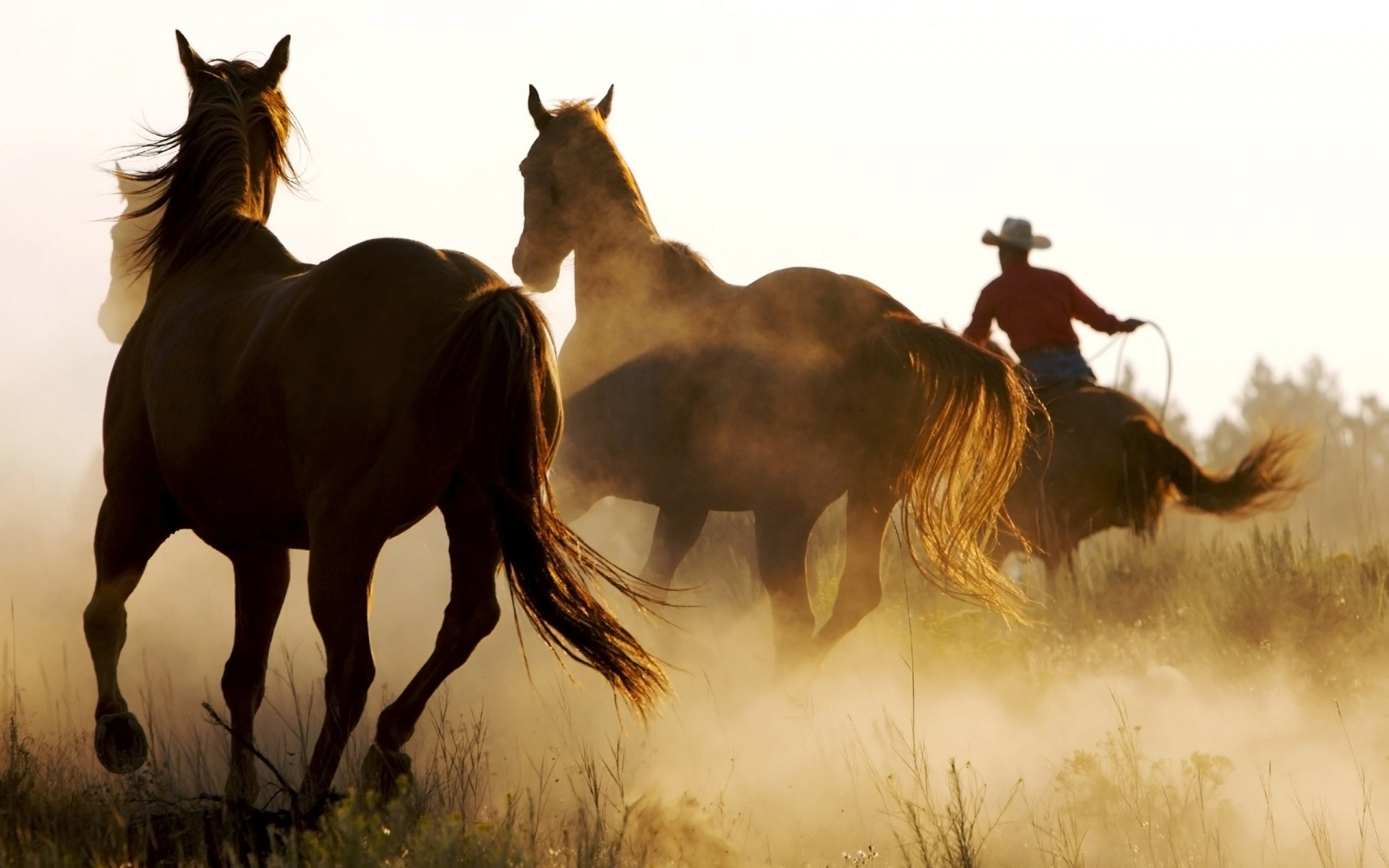 wild-horses-in-the-jungle-high-resolution-wallpaper-download-wild-horses-images-free
